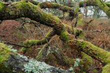 Nu kan du støtte mere urørt dansk natur gennem Verdens Skove