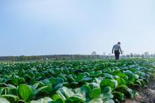 Tillsammans siktar vi alla på SydGrönt att det ska finnas ett brett sortiment på svensk frukt och grönt året om, över tid – Från svenska odlare.