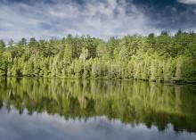Rekordhögt pris på skogsmark