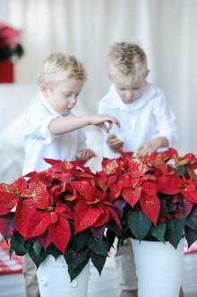 Julstjärnans dag 12/12-2012