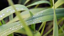 Scandic reducerer sin miljøpåvirkning