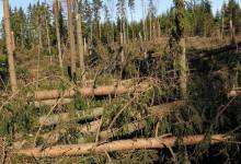 Allmänheten stöder mer blandskog för att motverka klimatrisker