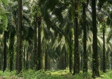 MILJØ OG KLIMA: L'Oréal er et af kun to firmaer i verden der har fået betegnelsen 'AAA' af CDP  for at beskytte regnskovene