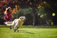 Friskies Doggy Run - koko perheen koirajuoksutapahtuma 26.9. Helsingissä