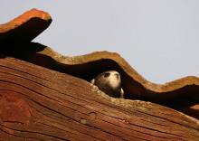 Designstudenter ska få Tornseglaren att återvända till sommarstaden