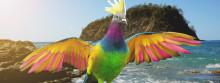 AIFS vergibt Paradiesvogel-Stipendium für ein Trimester in Costa Rica