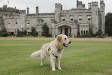 It's a dog's life at Dundas Castle