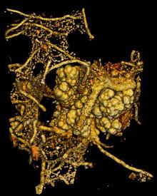 Svampar samlever med mikrober djupt nere i berggrunden