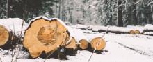 Stölder och skadegörelse allt vanligare i svenskt skogsbruk
