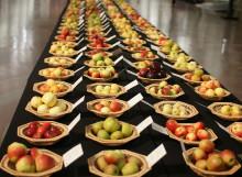 Det svenska äpplet hyllas under Nordiska museets äppeldagar 20-21 september!