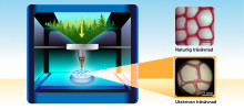 Härmar ultrastrukturen hos ved för 3D-printade gröna produkter