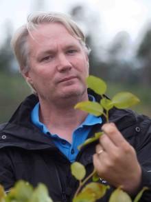 Genombrott för snabbväxande lövträd