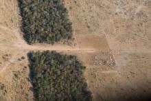 Ny rapport: Der ryddes mere skov end for fem år siden