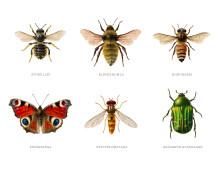 Det krävs en plan för att förbättra villkoren för pollinerande insekter