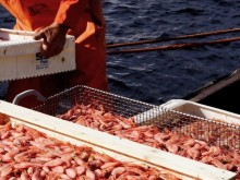 HaV satsar drygt fem miljoner för att minska oönskade bifångster i fisket