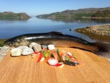 Smaken av Arktisk røye - Fra oppdrett til gastronomisk produkt (GASTRORØYE)