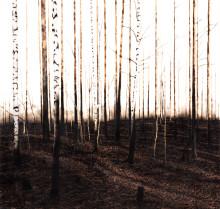 Wetterling Gallery presenterar verk av Ylva Ceder på Market Art Fair