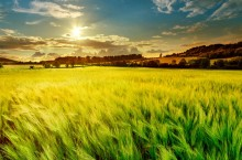 Helt ny gröda visar rekordresultat