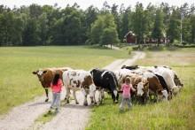 Jordbruksverket utlyser ytterligare 16 miljoner för att främja ekologisk mat