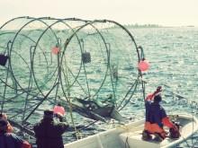 Stärkt skydd för bestånden av vild lax i Östersjön
