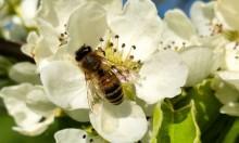 Djurgården vill bidra till ökat surr i Stockholm