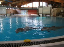 Tierschützer gegen Sanierungsplan des Nürnberger Tiergartens wegen Delfingefährdung - Vermutete Kosten für Ausweich-Quartier 20 Millionen