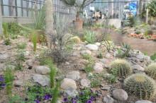 Trädgårdsföreningen bjuder på Kaktus i kubik