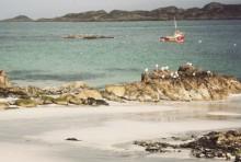 """Viktigt beslut reglera internationell handel """"Kan stoppa överfisket av hajar"""""""