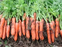Risikoordning for grøntnæringa etableres