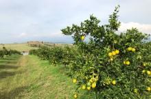 En speciell citruslåda
