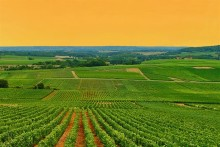 ABC - Alsace, Bourgogne och Champagne & Chablis