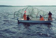 HaV inför nya regler för laxfiske