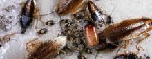 Disse insekter ønsker du ikke at have i hjemmet