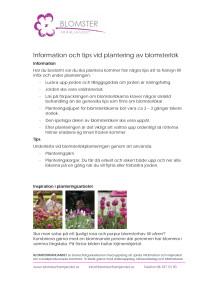 Information och tips vid plantering av blomsterlök