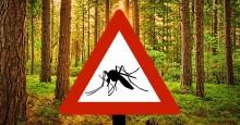 Sveriges största myggforum är enat: 2018 blir ett fasansfullt myggår