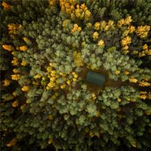 Regeringens glorifiering av trä hotar det klimatsmarta byggandet