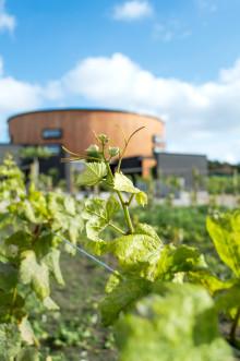 Nordic Sea Winery - attraktivt besöksmål i Simrishamn för vin- och matintresserade
