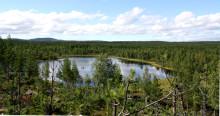 """Näringsväven i """"bruna"""" sjöar är mer motståndskraftig mot kvävenedfall"""