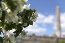 Vigelandsparken og Vigeland-museet: 10 tips som sikrer kunstopplevelsen i sommer