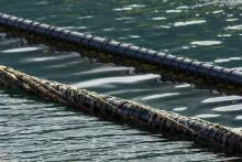 – Forlatte blåskjellanlegg er en miljøtrussel langs norskekysten