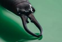 Ukryty świat insektów - raport przygotowany przez firmę Sony we współpracy z organizacją ekologiczną Buglife