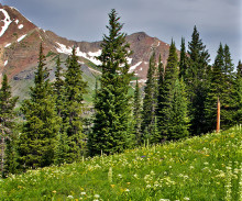 Varmare klimat kan få stor inverkan på bergsekosystem jorden runt