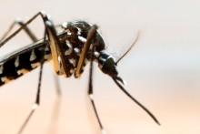 DIAMEDIS Labor erweitert Angebot um Chikungunya Test