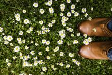 Nattergalesang og rådhusklokker