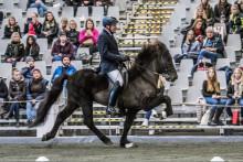 Världspremiär: Islandshästarna har flyttat in på Elmia