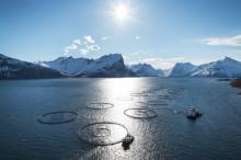 Sterk vekst i sjømateksporten