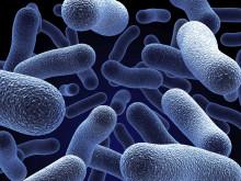 Ny onlineutbildning - Bakterier