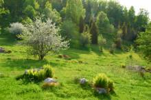 Stort intresse för Naturbeteskött från Östergötland