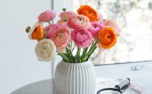 Ta våren på forskudd med ranunkler