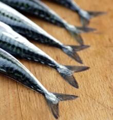FISK SKA VARA PÅ LAND - äntligen certifierad